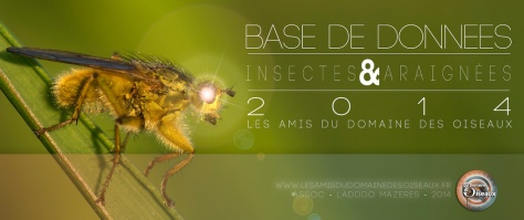 Bandeau-insectes-LADDDO