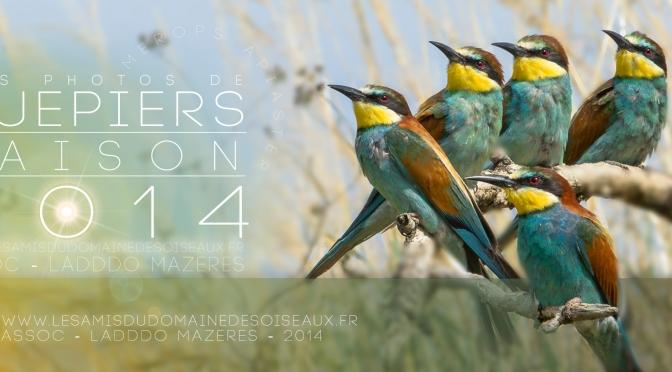 Vos Photos de Guêpiers «SAISON 2014»