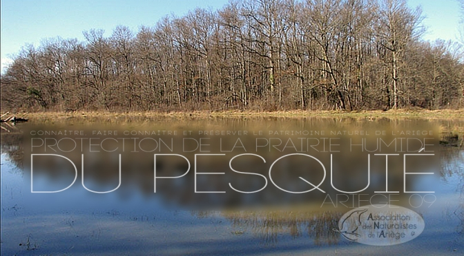 Protection de la prairie humide du Pesquié (Ariège)