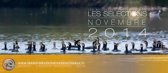 Les sélections photos Novembre 2014
