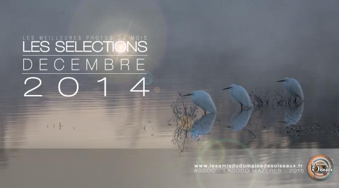 Sélections photos DECEMBRE 2014