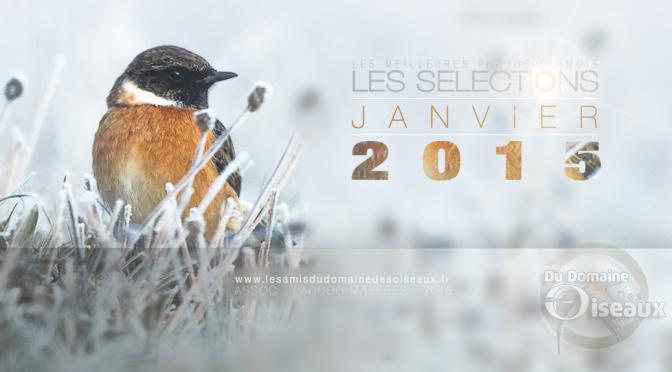 Sélections photos JANVIER 2015