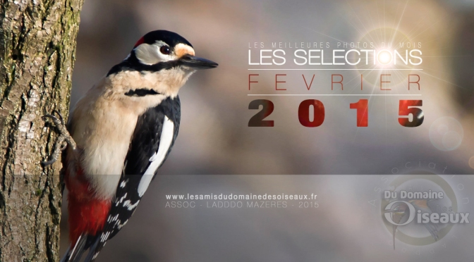 Sélections photos FEVRIER 2015