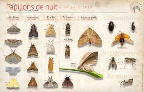 Papillons de nuits - 30 Avr 2015