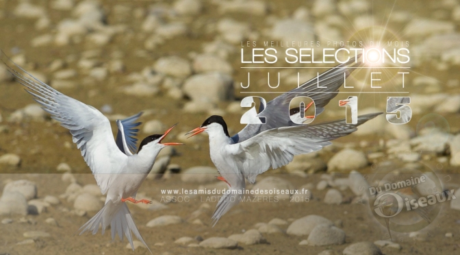 SELECTIONS PHOTOS JUILLET 2015