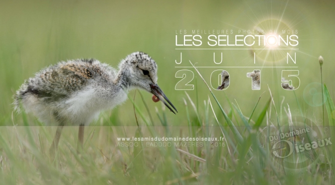 SELECTIONS PHOTOS JUIN 2015
