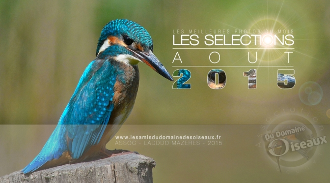 SELECTIONS PHOTOS AOUT 2015