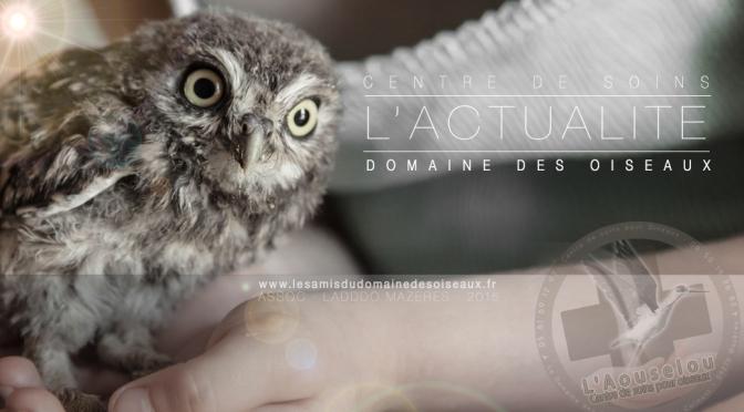 L'ACTUALITÉ DU CENTRE DE SOINS – DOMAINE DES OISEAUX