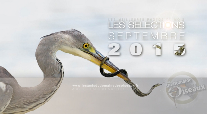 SELECTIONS PHOTOS SEPTEMBRE 2015