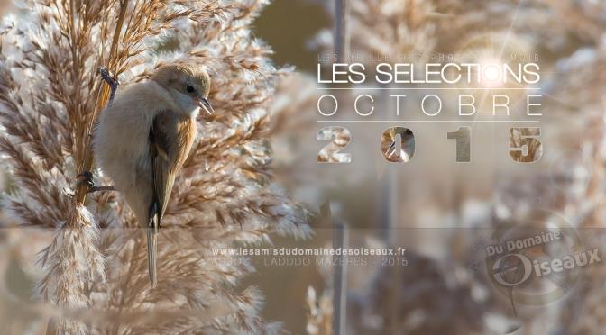 SELECTIONS PHOTOS OCTOBRE 2015