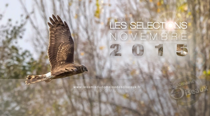 SELECTIONS PHOTO NOVEMBRE 2015