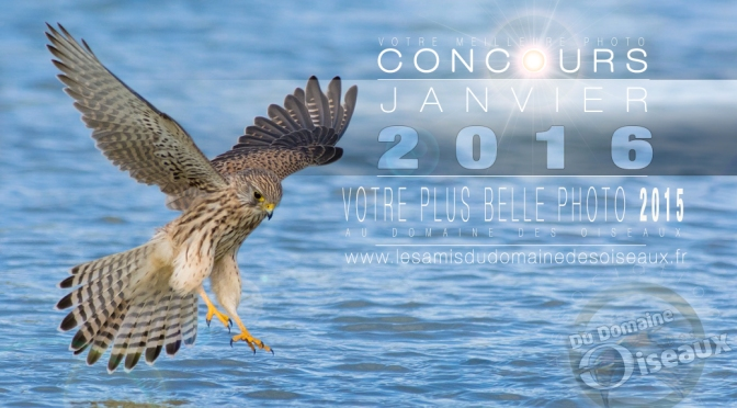 Concours photo JAN/FEV 2016