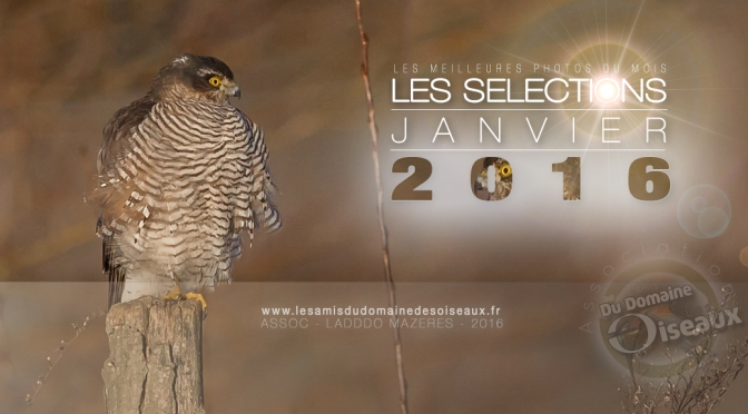 SELECTIONS PHOTO JANVIER 2016