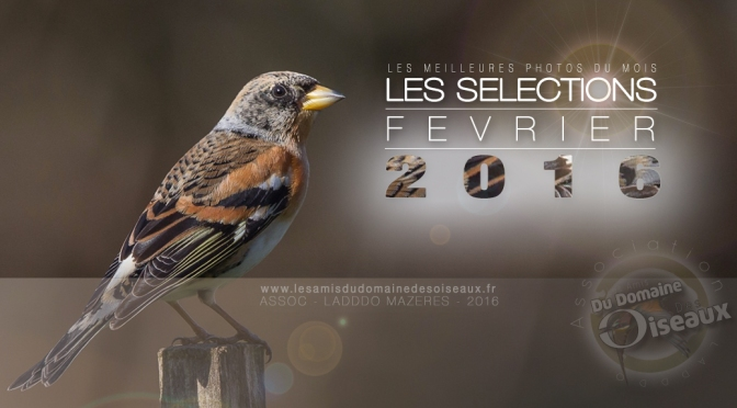 SELECTIONS PHOTO FEVRIER 2016