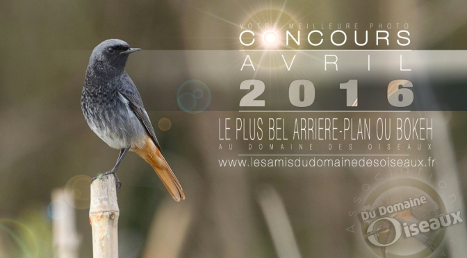 Concours photo AVR 2016