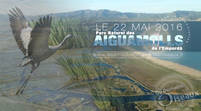 Sortie associative – Parc naturel des Aiguamolls 22 mai 2016