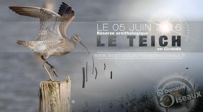 Sortie associative – Réserve ornithologique du Teich 5 juin 2016