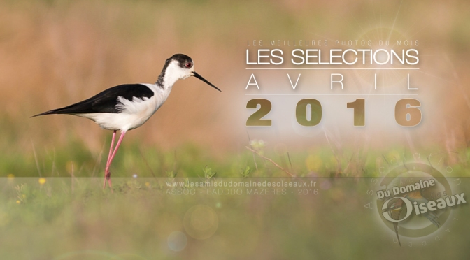 SELECTIONS PHOTO AVRIL 2016