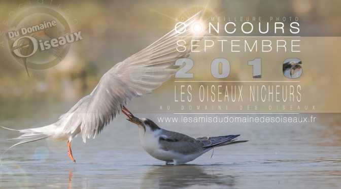Concours photo Sep/Oct 2016