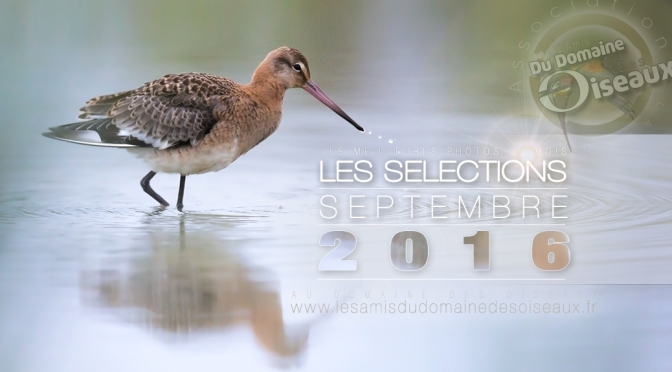 SELECTIONS PHOTO SEPTEMBRE 2016