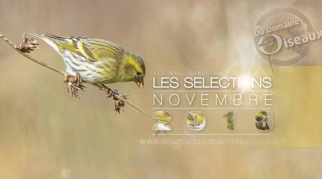 les-selections-nov-2016