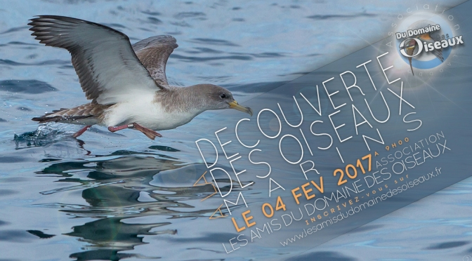 Sortie associative – Oiseaux marins 04 février 2017