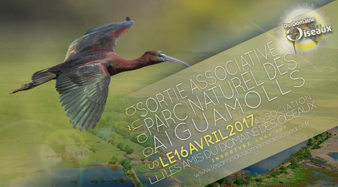Sortie associative Aiguamolls 16 avril 2017