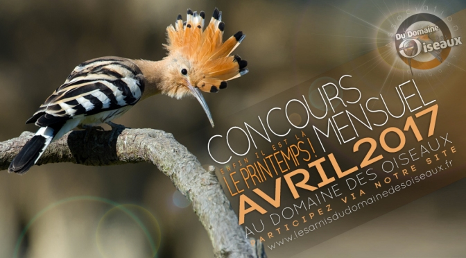 Concours photo AVRIL 2017 : LE PRINTEMPS !!