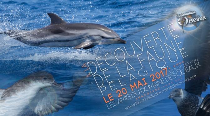 Sortie Associative – Faune pélagique de Méditerranée – 20 MAI 2017