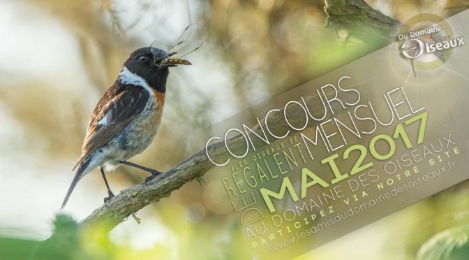 CONCOURS PHOTO MAI 2017 : Les oiseaux se régalent !
