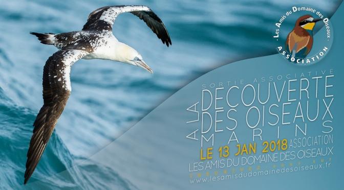 Sortie associative – Oiseaux marins 13 janvier 2018