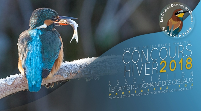 Concours photo «Hiver 2018»