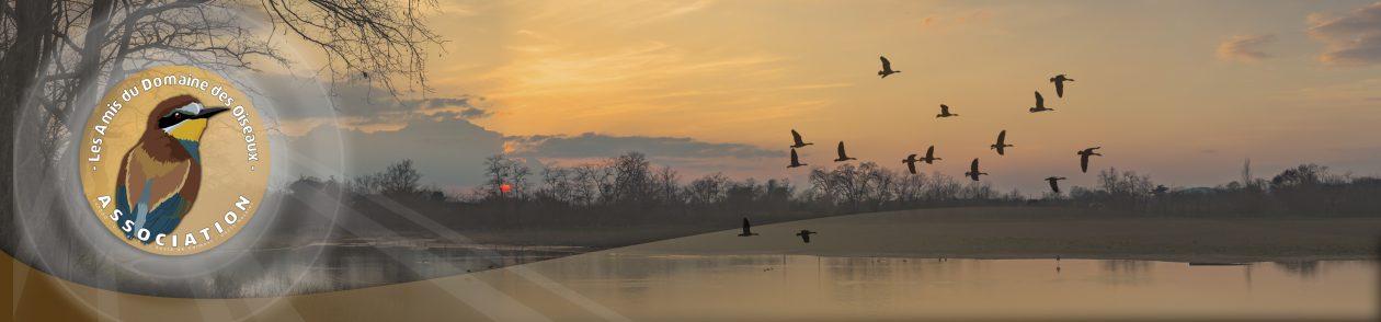Les Amis Du Domaine Des Oiseaux