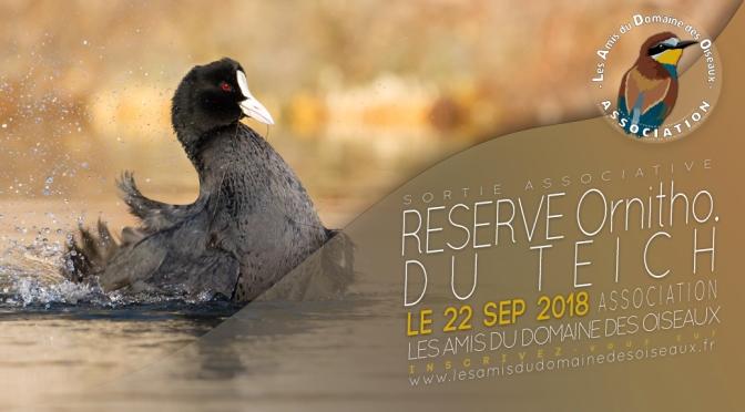 Sortie associative – Réserve ornithologique du Teich 22 sep 2018