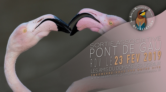 Sortie associative – Pont de Gau 23 Fev 2019