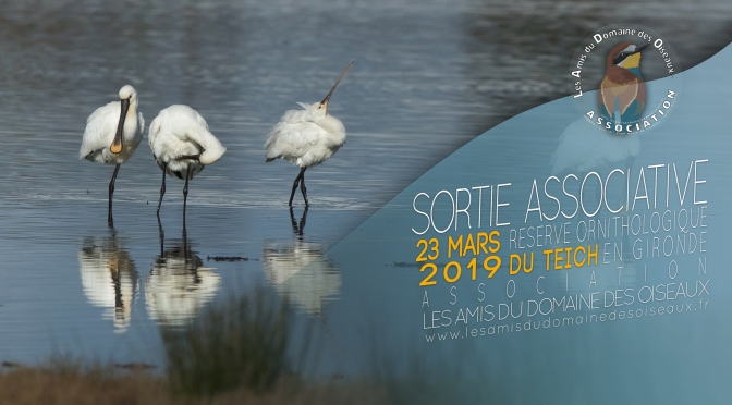 Sortie associative – Le Teich 23 mars 2019