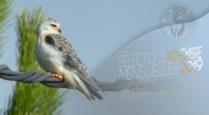 SÉLECTIONS PHOTO NOVEMBRE  2019 – Les Amis du Domaine des Oiseaux