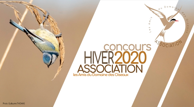 Concours hiver 2020