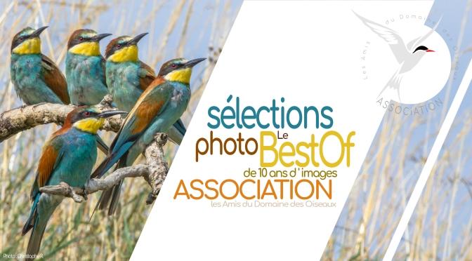 Sélections photo le «Best Of» 10 ans d'images au domaine des oiseaux