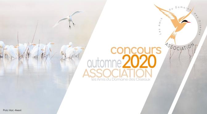 Concours Automne 2020 : Les feuilles d'Automne