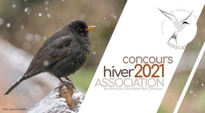 CONCOURS HIVER 2021 : Un hiver froid !