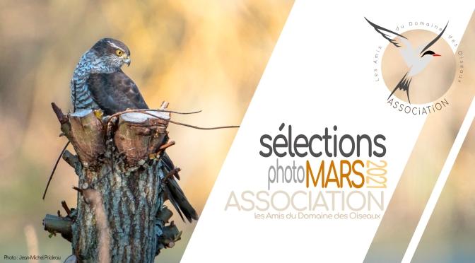 Les sélections de MARS 2021